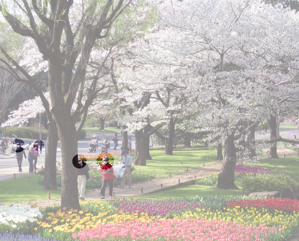 People wearing face masks walking in a park with tulips blooming