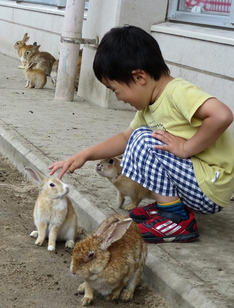 Small child petting rabbits on Okunoshima Bunny Island