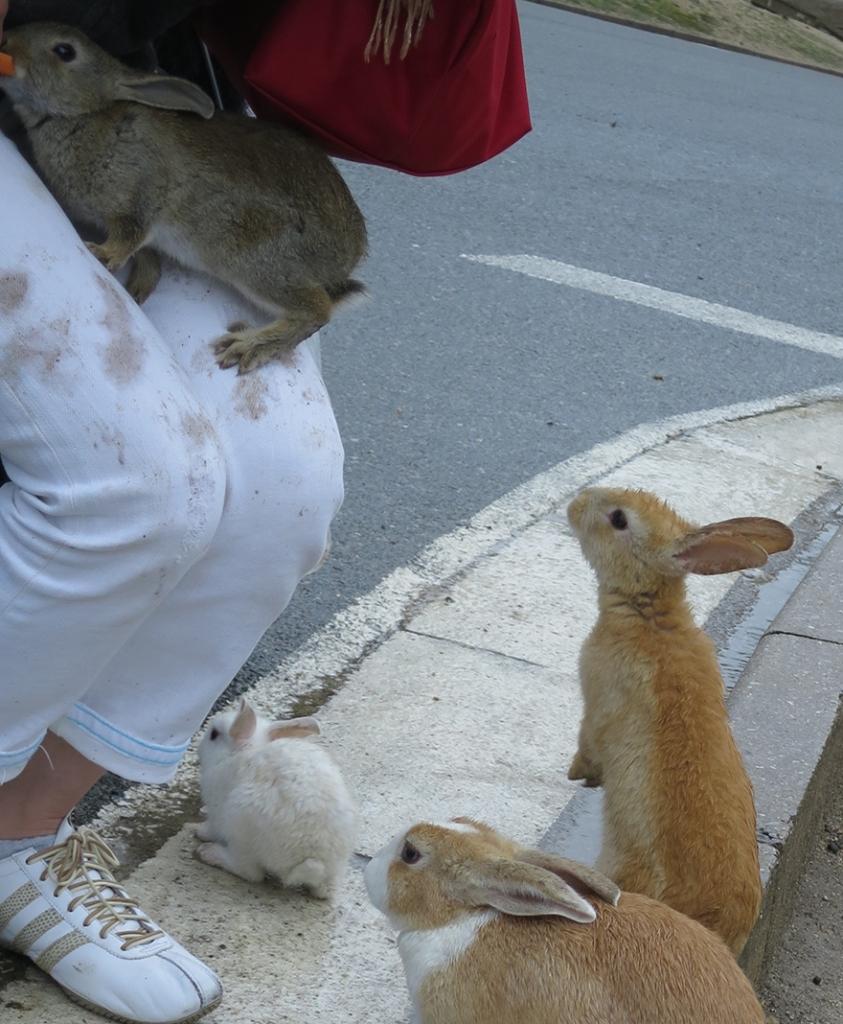 Visitor in white pants with rabbit paw prints on Okunoshima Bunny Island