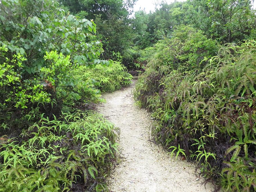 Fern-lined walking path on Okunoshima Bunny Island
