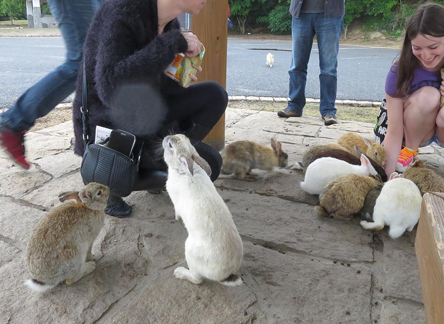 Rabbits gathering around visitors on Okunoshima Bunny Island