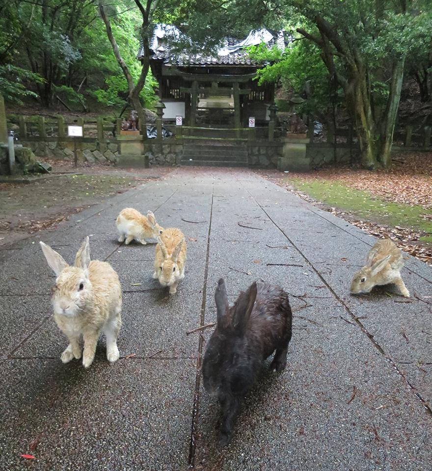 Rabbits at deserted shrine on Okunoshima Bunny Island