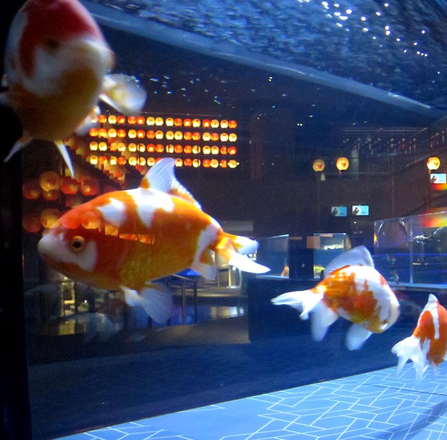 Goldfish at Sumidagawa Aquarium in Asakusa
