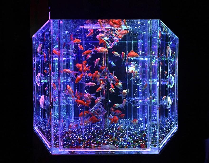 Goldfish at Art Aquarium
