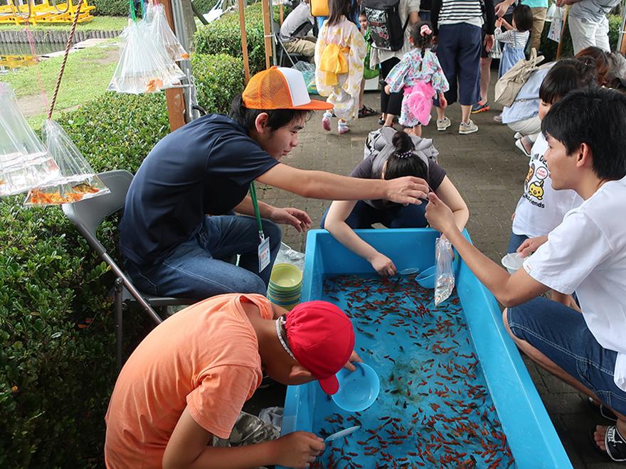 Catching goldfish at the Edogawa Goldfish Festival