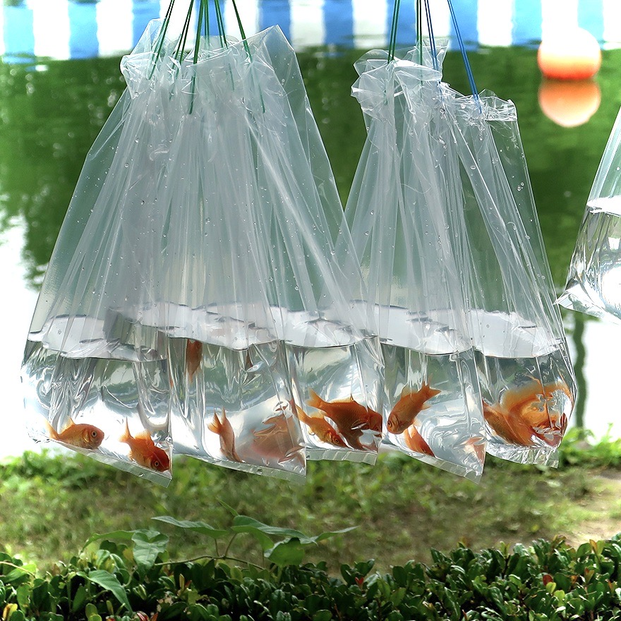 Goldfish in clear bags at the Edogawa Goldfish Festival