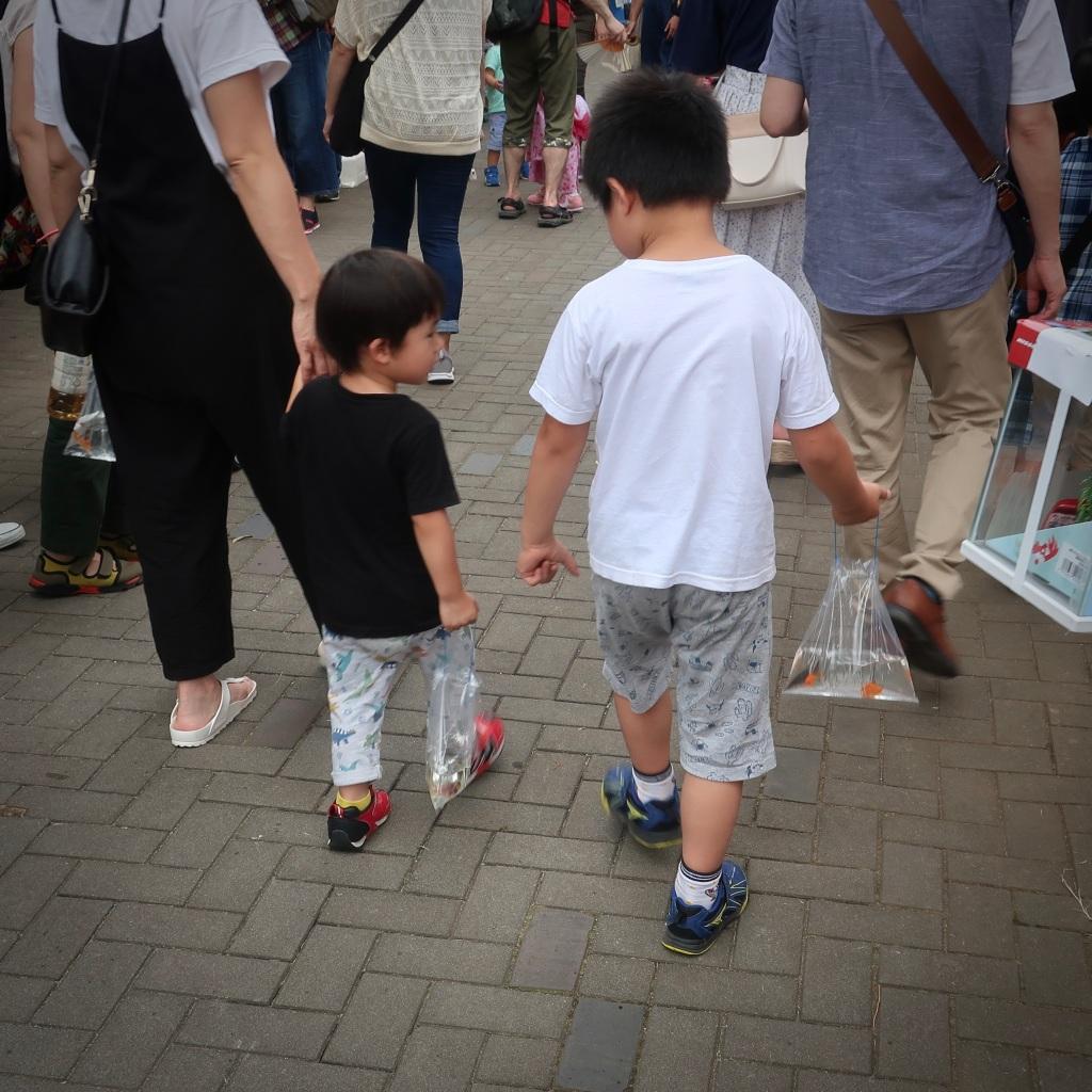 Two boys taking goldfish home from the Edogawa Goldfish Festival