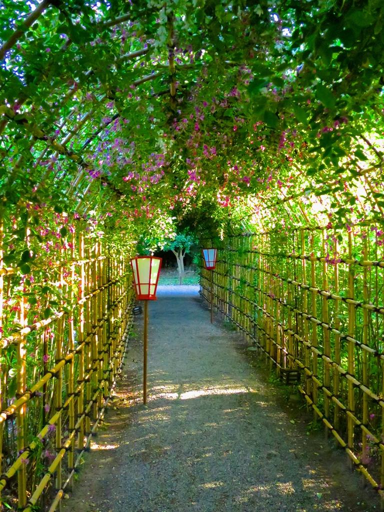 Bush clover tunnel at Mukojima Hyakka-en