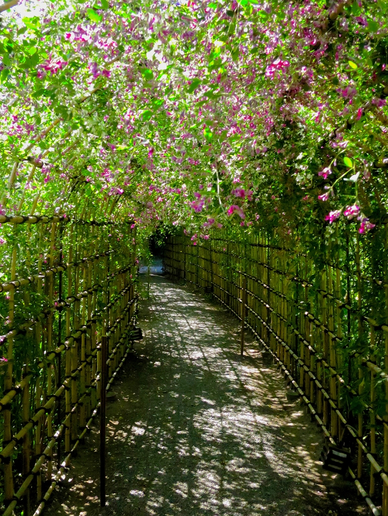 Bush clover tunnel at Mukojima Hyakka-en