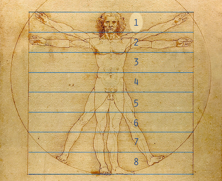 DaVinci man diagram showing head height is one eighth of body height