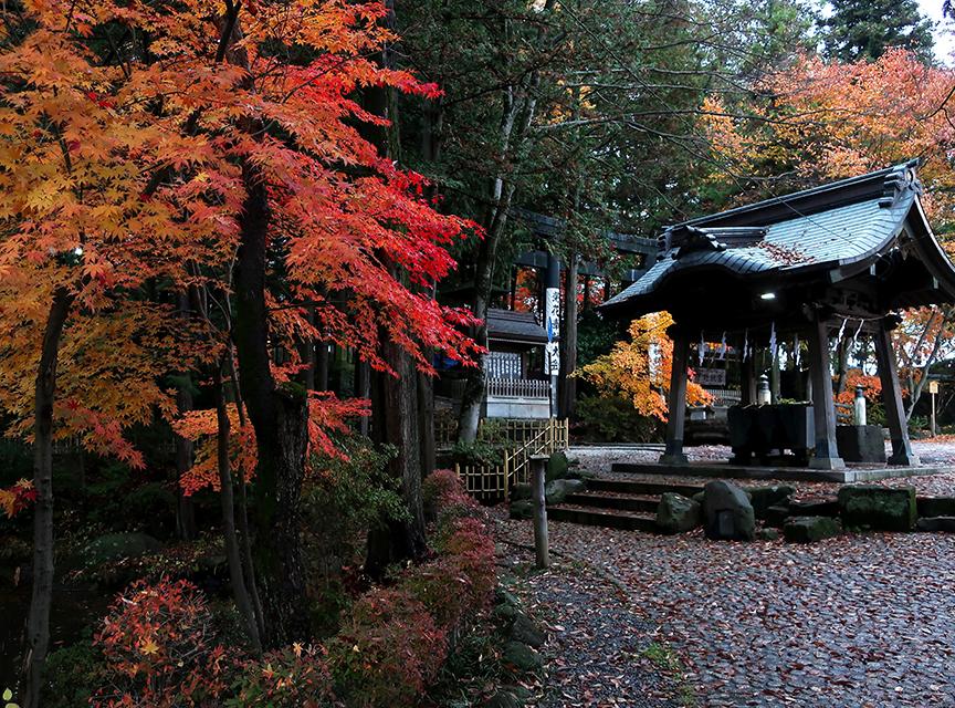 Autumn leaves at Suwa Taisha Akimiya in Suwa City Nagano