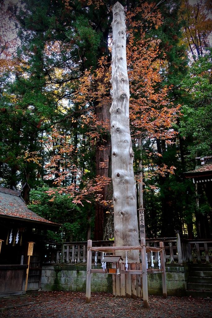 Log used in Onbashira festival to ride down a mountain at Suwa Taisha Akimiya in Suwa City Nagano