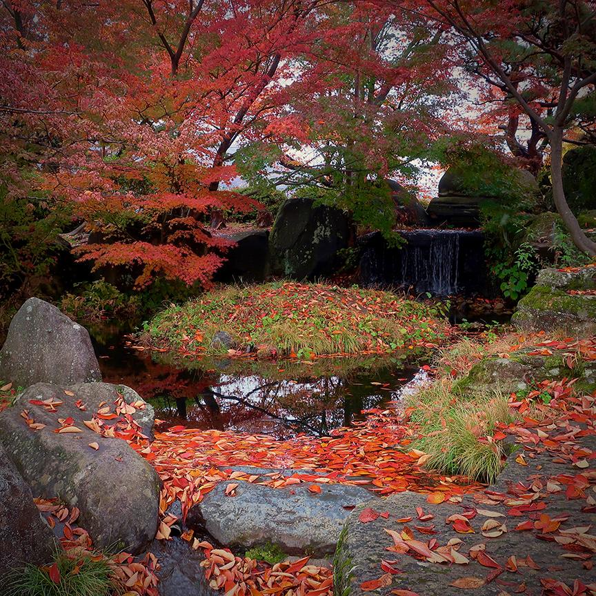 Autumn leaves in garden at Takashima castle in Suwa City Nagano