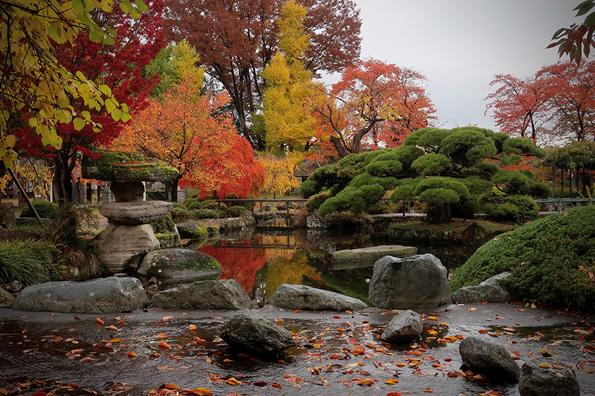 Autumn leaves in garden at Tateshima castle in Suwa City Nagano