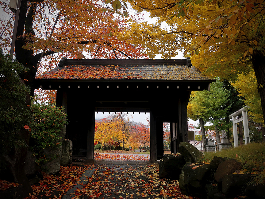 Gate to garden with autumn leaves at Takashima castle in Suwa City Nagano
