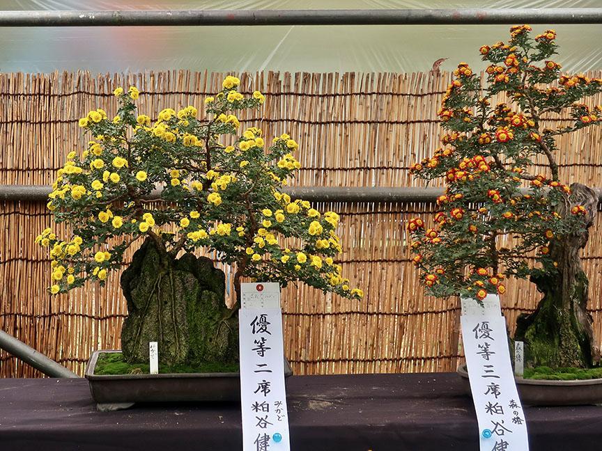 Bonsai chrysanthemums at Hibiya Park in Tokyo