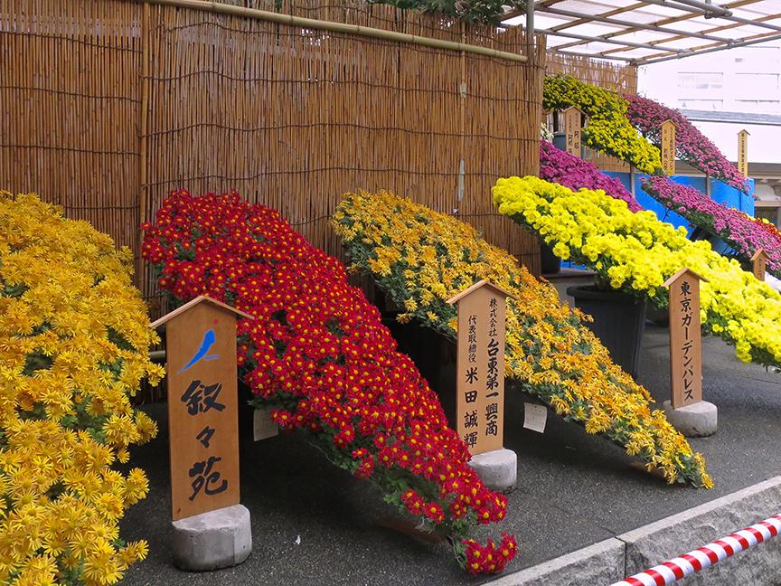 Bonsai chrysanthemums at Yushima Shrine in Tokyo