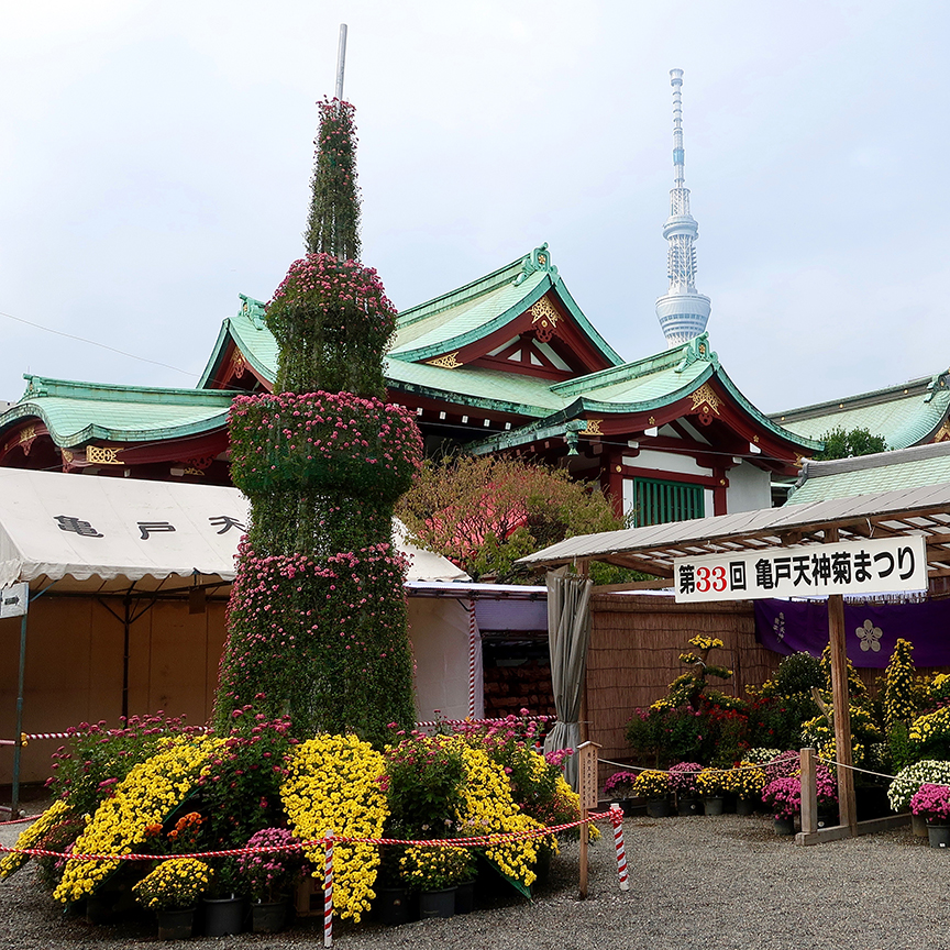 Skytree replica made of living bonsai chrysanthemums at Kameido Tenjin shrine in Tokyo