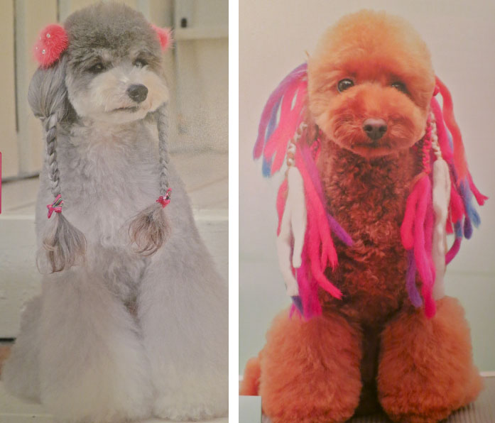 Dogs with fancy trimmed fur