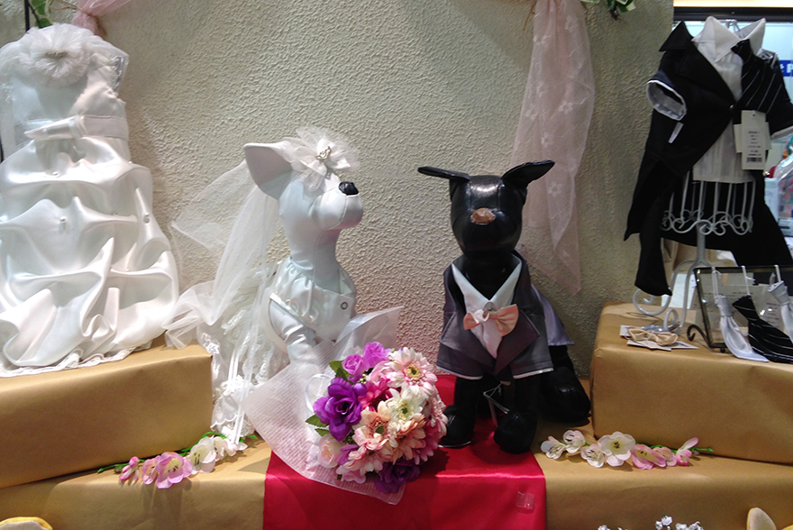 Bride and groom dog outfits