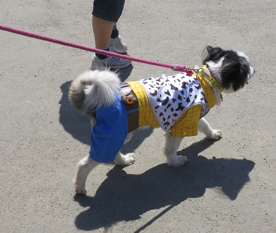 "Dog wearing Toy Story ""Woody"" costume"
