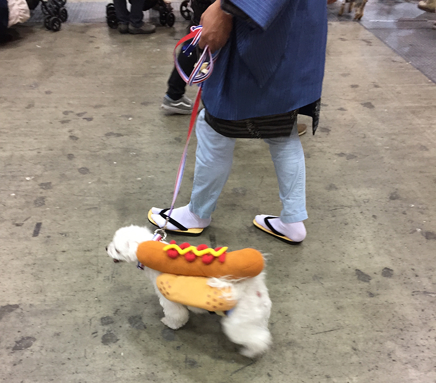 Dog wearing hot dog costume