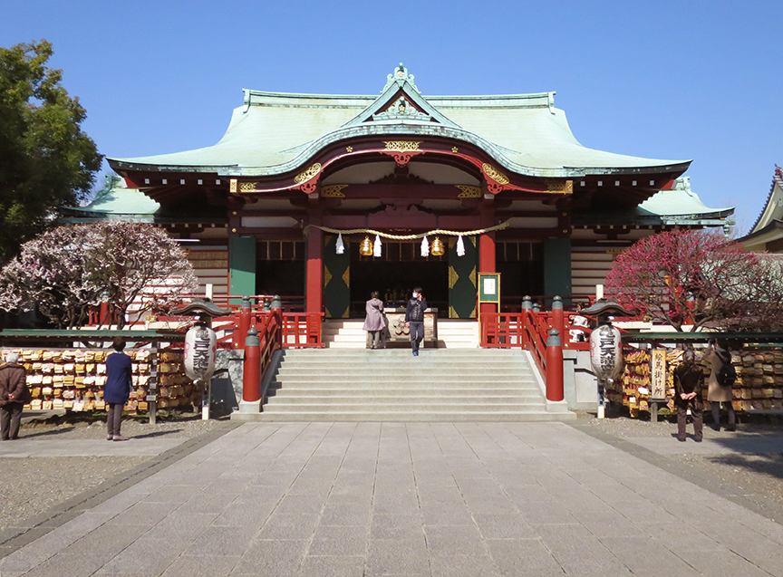 Plum blossoms at Kameido Tenjin shrine