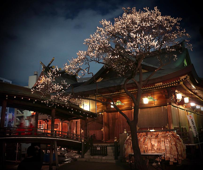 Plum blossoms at Yushima Tenjin shrine lit up at night