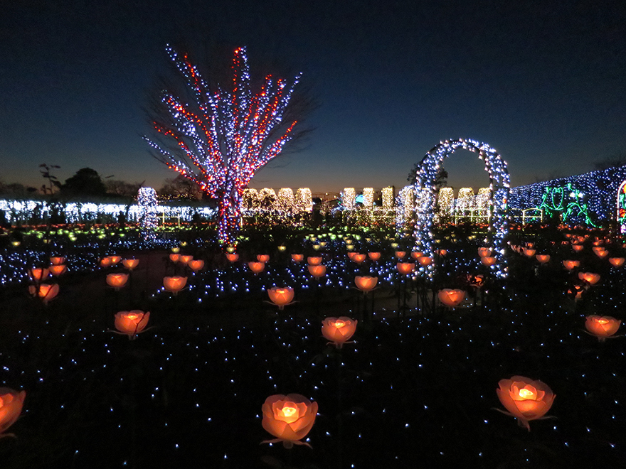 Winter illuminations at Ashikaga Flower Park