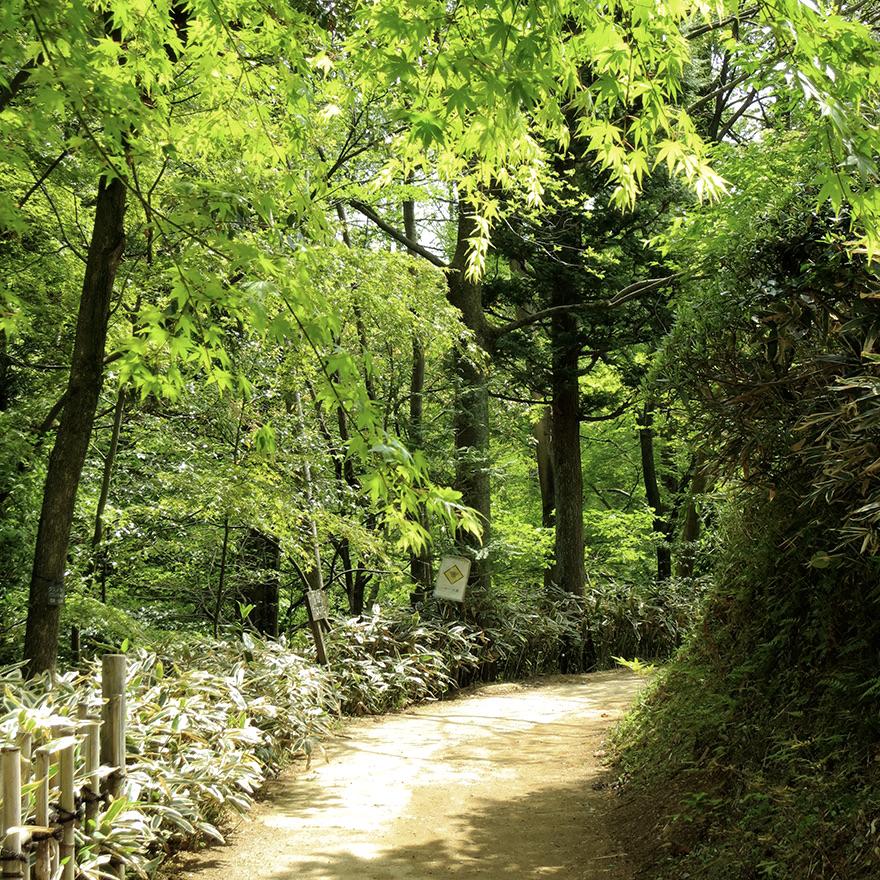 Walking path at the Nihon Minka-en Japanese Folk House Garden