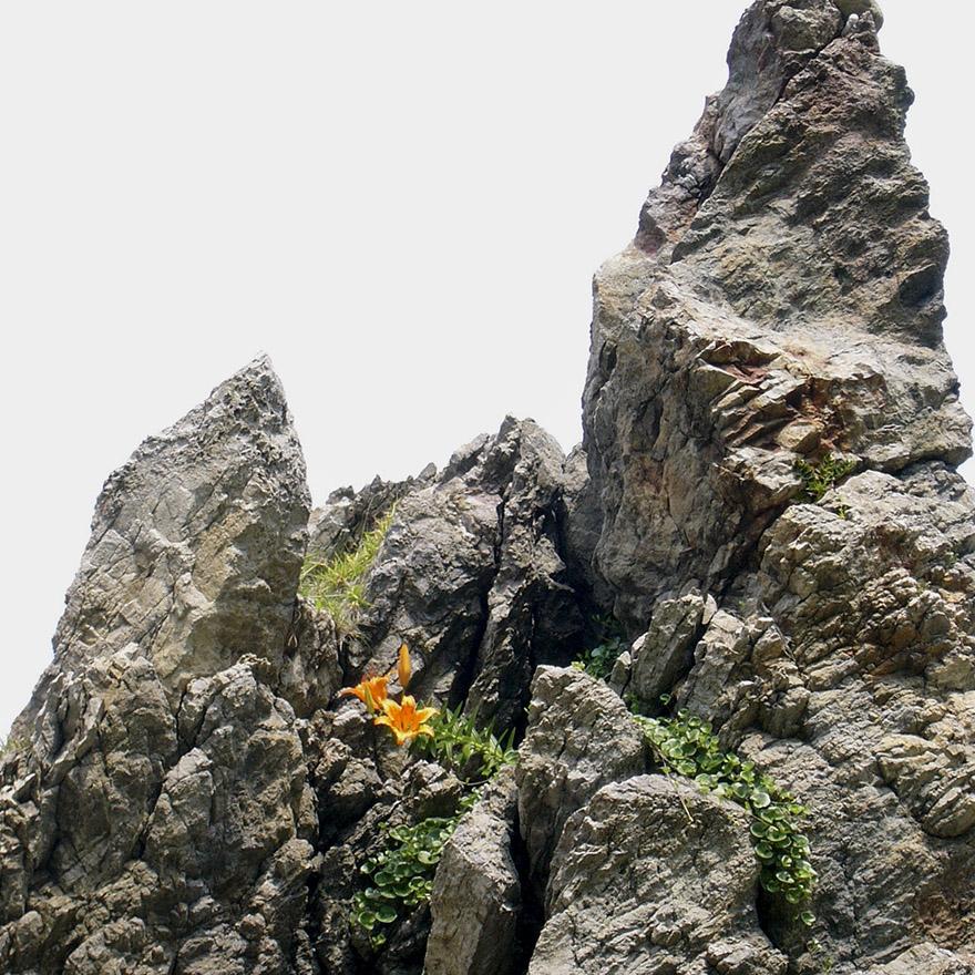 Daylilies blooming on rocks on Sado Island
