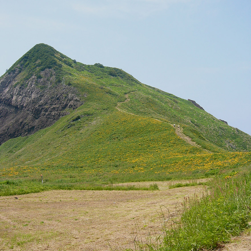 Daylilies blooming on the hills of Sado Island