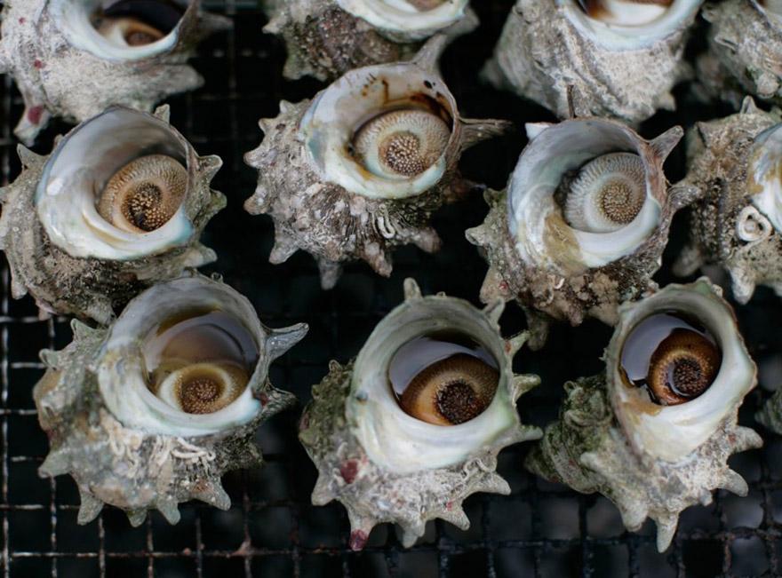 Sazae molluscs on Sado island